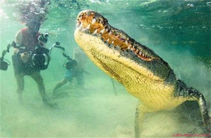 摄影师与鳄鱼面对面