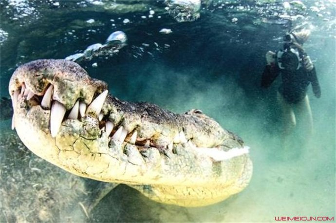 摄影师拍摄鳄鱼獠牙