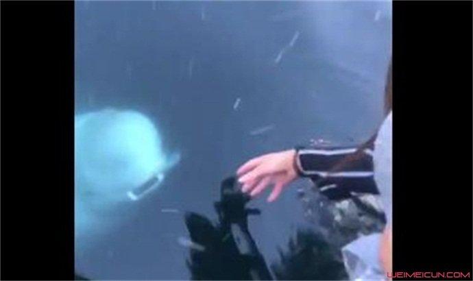 白鲸海中捡回手机