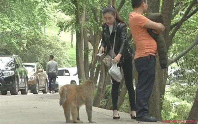游客被猴抢走手机