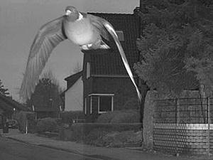 警方给鸽子开罚单是怎么回事 具体详情经过