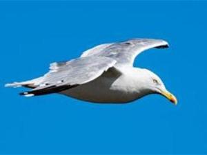 鸽子超速飞行被罚 详细情况曝光背后原因是这个