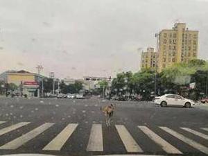袋鼠惊现宁波街头是什么情况 揭露始末及现