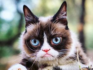 表情包不爽猫去世 不爽猫是怎么走红的揭其名字来源