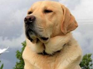 女子将遗产留给狗怎么回事 背后原因略心酸