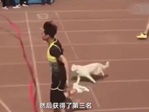 高校百米赛狗子跑第三 网红狗来历曝光曾跑去课堂听课