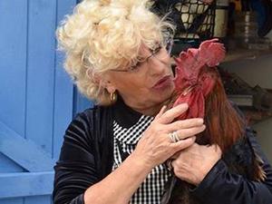大公鸡被告上法庭是什么情况 状告大公鸡始末经过惊呆你我
