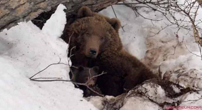 男子被熊拖进洞穴