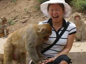猴子多次打劫游客怎么回事 游客现场杀鸡儆猴起到了作用