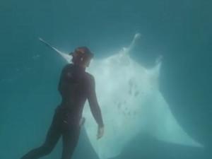 潜水遇魔鬼鱼求助怎么回事 一场人与鱼不寻常的半小时会面