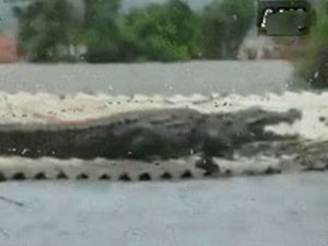 鳄鱼在屋顶晒太阳怎么回事 奇观一幕曝光视频被疯传