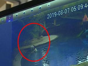 女子在泳池给狗洗澡 奇葩操作监控视频曝光
