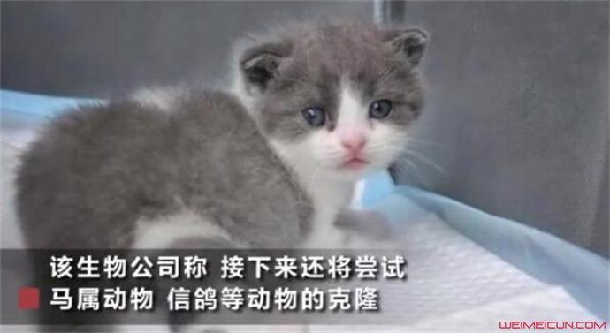 我国首只克隆猫
