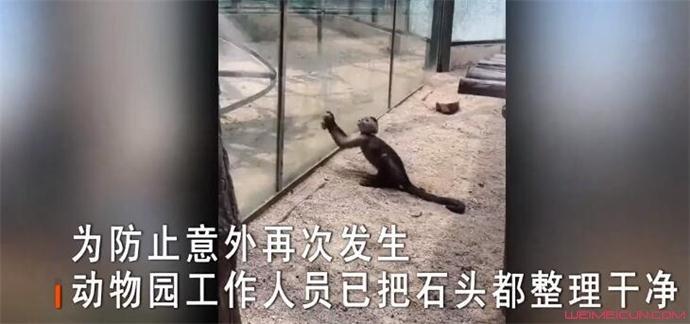 动物园猴子砸玻璃始末