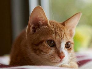 万元寻猫不欢而散详情起底 这是开空头支票的套路吗
