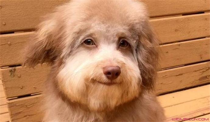 小狗为何长着一张人脸