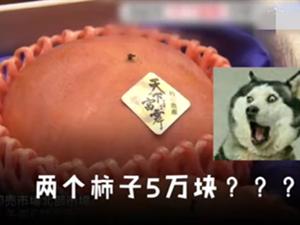 天价柿子2个5万元 柿子贵族有何特殊之处原因曝光