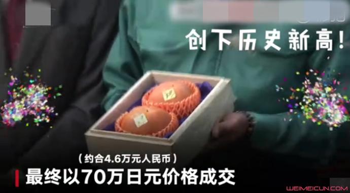 天价柿子2个5万元