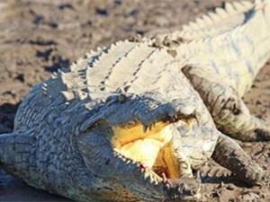 11岁女孩斗鳄鱼详情经过 这一幕真是既惊险