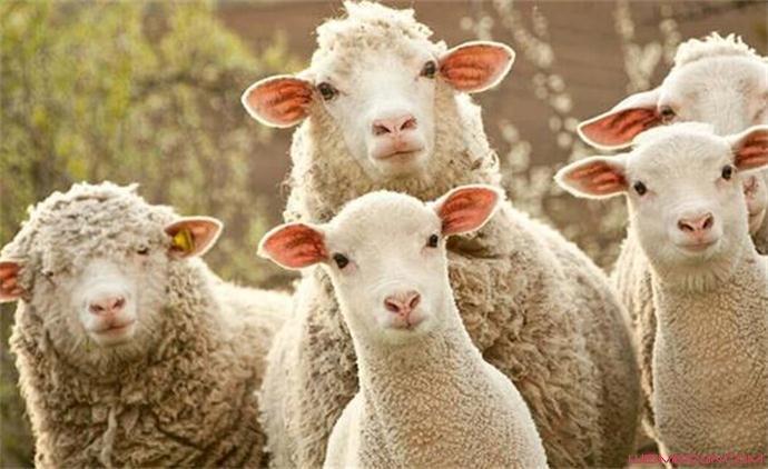 薅羊毛用户是什么意思