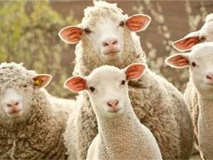 薅羊毛用户被封号详情介绍 揭露薅羊毛用户是什么意思