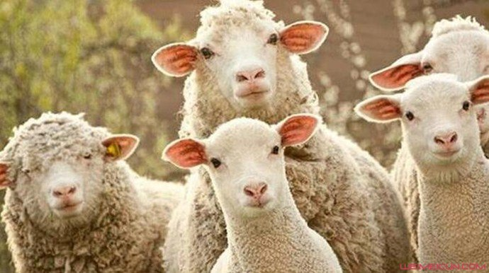 圈内成员揭秘薅羊毛行为