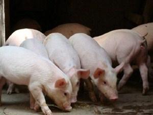 2万月薪招聘养猪 详细情况曝光其实还有学历要求