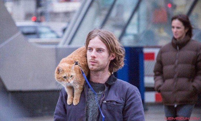 流浪猫鲍勃拍续集