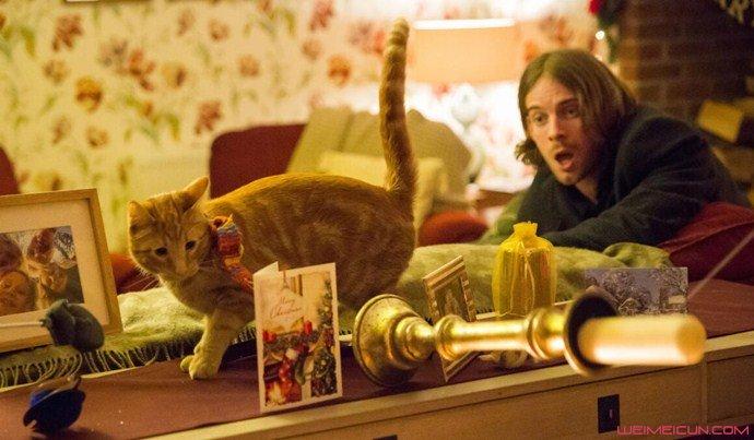 流浪猫鲍勃续集讲什么的