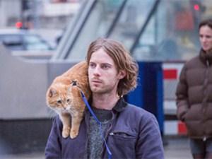 流浪猫鲍勃拍续集 这具体的详情细节令粉丝