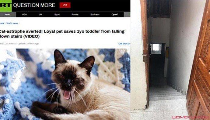 家猫救下1岁男孩怎么回事