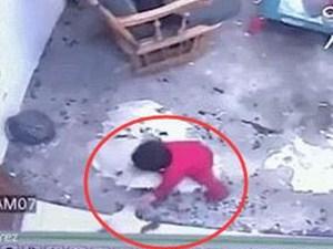 家猫救下1岁男孩 此事完整经过曝光好惊险好感动