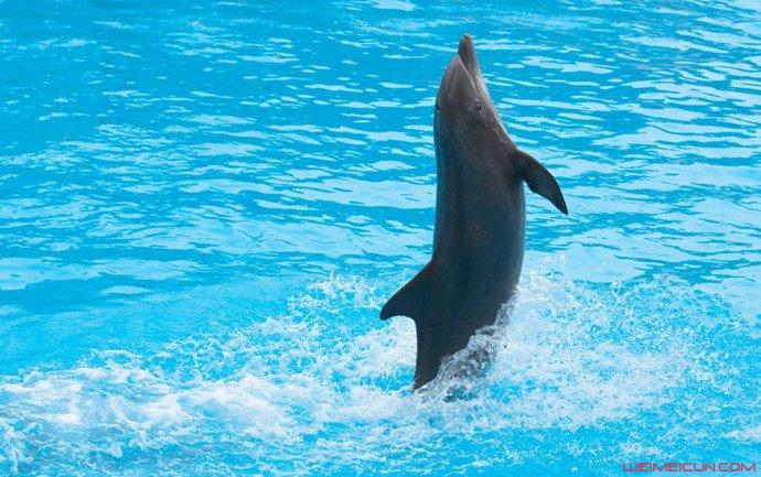 海豚也分左右撇子