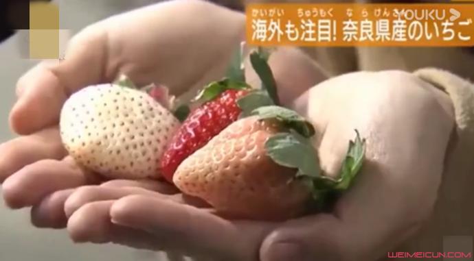 天价草莓1颗900元