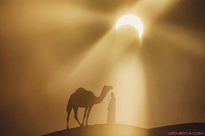 骆驼背上的太阳
