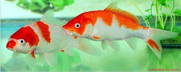 鱼为什么睁着眼睛睡觉