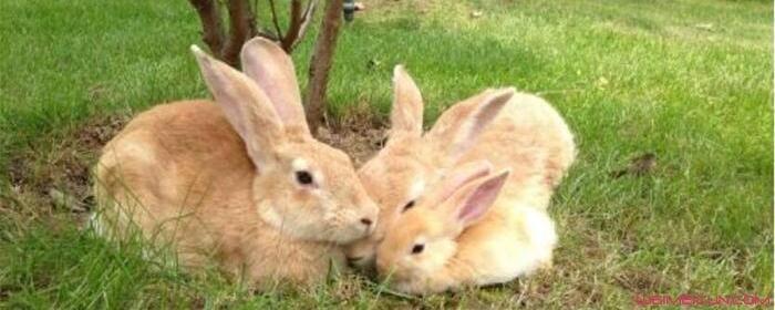 兔子为什么喜欢被摸头