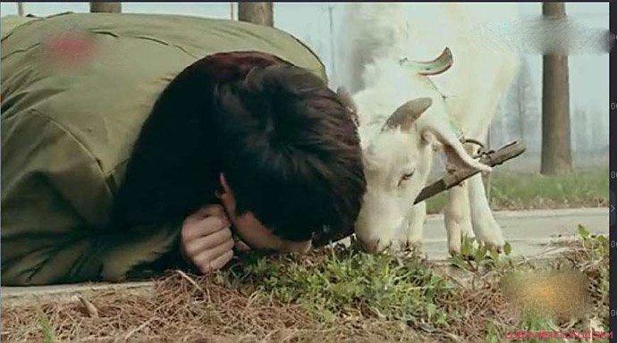 张艺兴回应学羊吃草