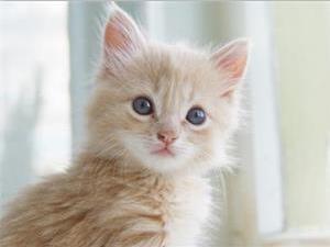 猫为什么喜欢闻腋下?