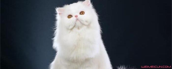 猫为什么喜欢闻腋下