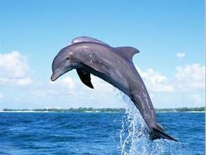 海豚为什么会自杀?
