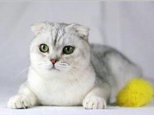 猫为什么喜欢咬手?
