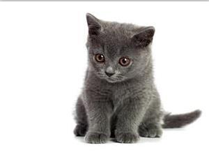 为什么猫满地打滚?