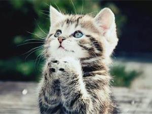 猫咪为什么不喜欢被亲?
