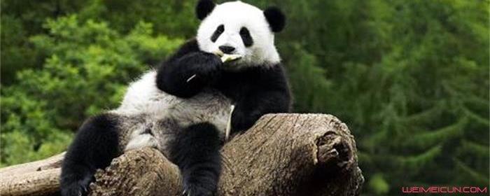 为什么只有中国有熊猫