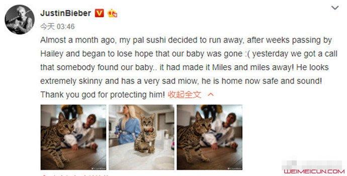 比伯寻回宠物猫