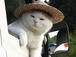 日本网红猫叔去世 距离18岁仅差6天猫叔是怎