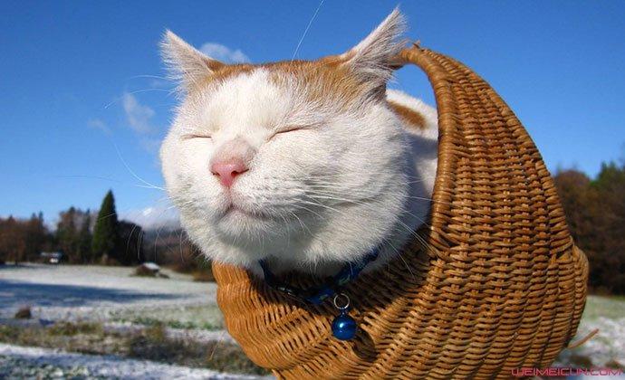 网红猫叔去世原因