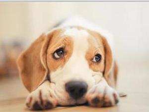 狗狗为什么不记仇?