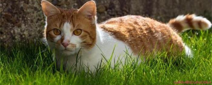 猫为什么不喜欢照相